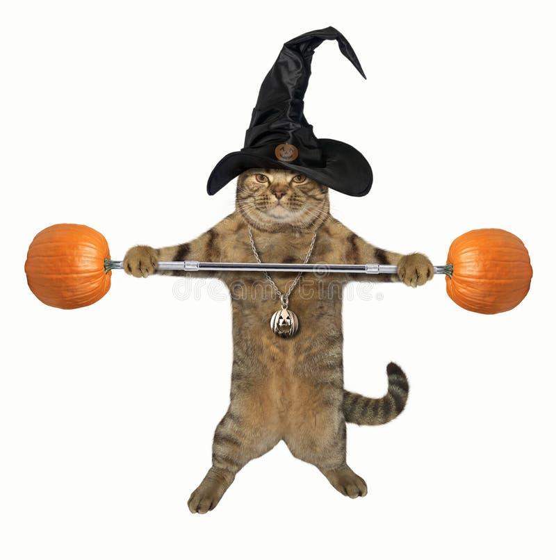 Katze Weightlifter 4 stockbild