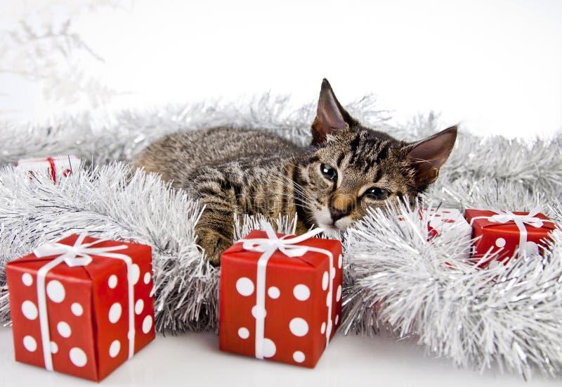 tatzen rudolf happy smile christmas design stock abbildung. Black Bedroom Furniture Sets. Home Design Ideas