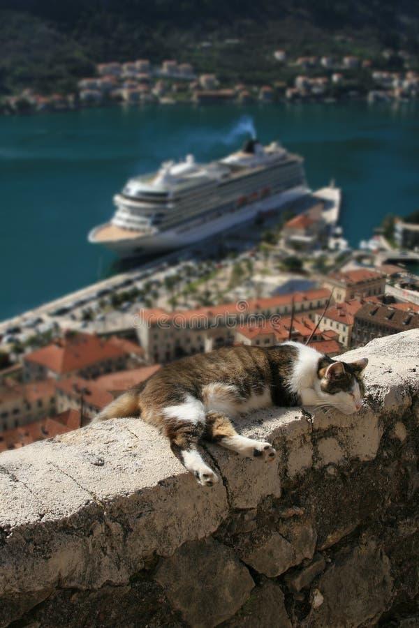 Katze, welche die Sonne auf Stadtmauern genießt stockfotos