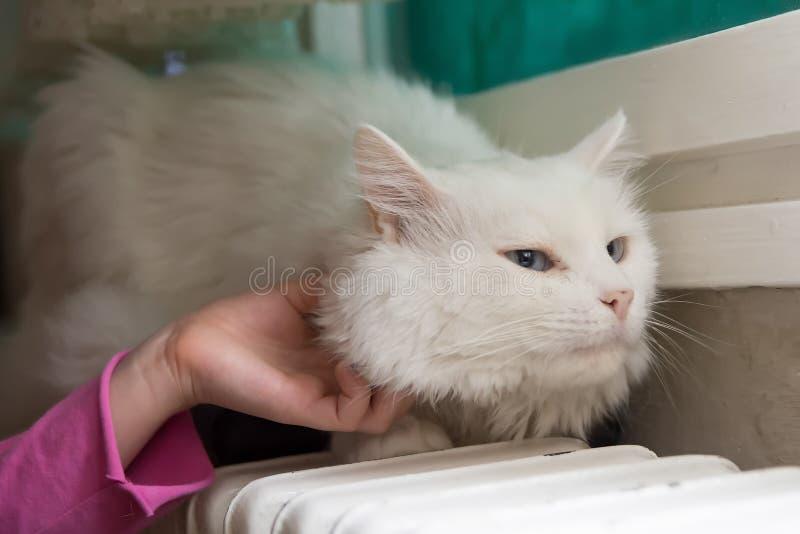 Katze, welche die Umarmung genießt stockfotos
