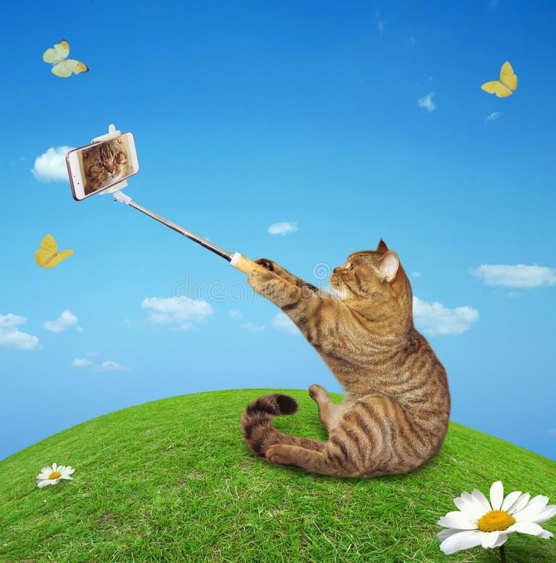 Katze in Wiese 2 lizenzfreies stockbild