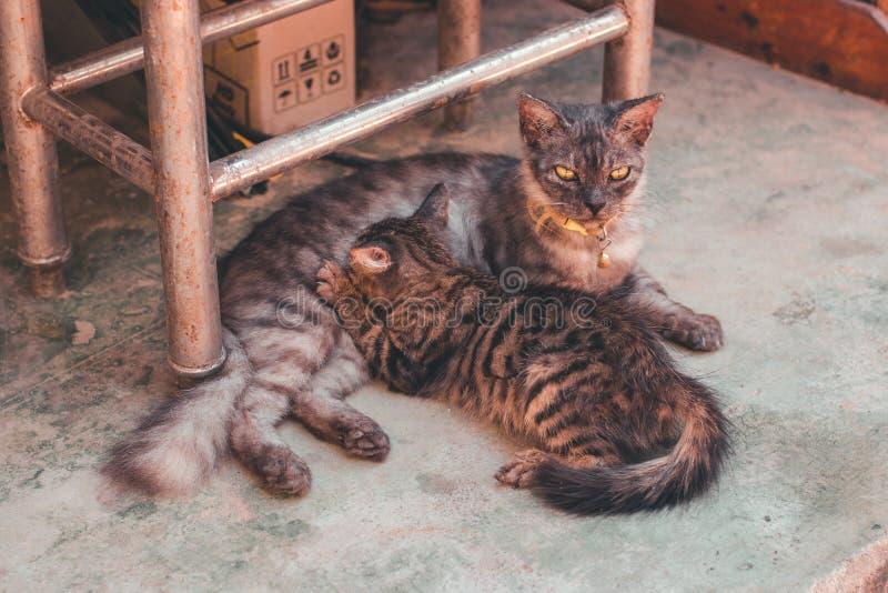 Katze zwei an der Straße stockfotografie