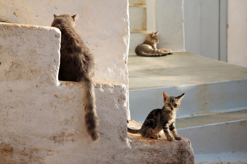 Katzefamilie stockfotografie