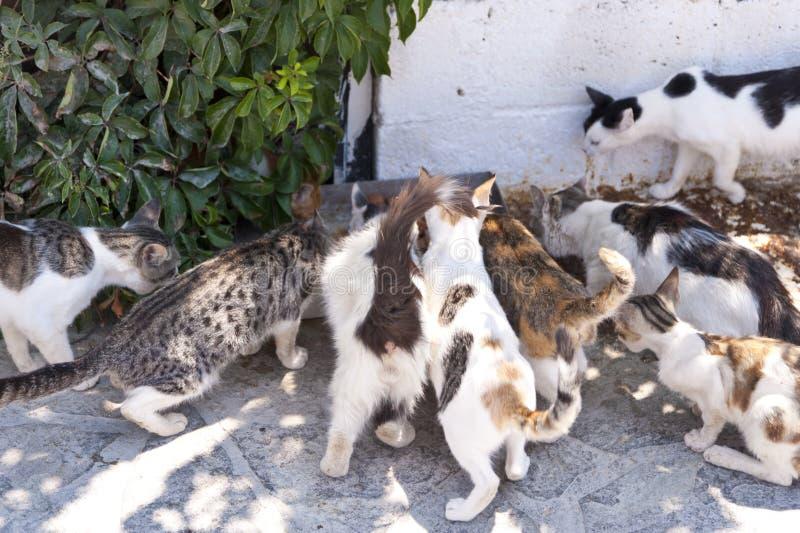 Katzen auf Samos lizenzfreie stockfotos