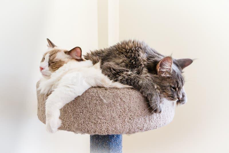 Katzen-Begleiter stockbilder