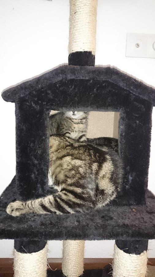 Katzen in DA-Haus lizenzfreie stockfotos