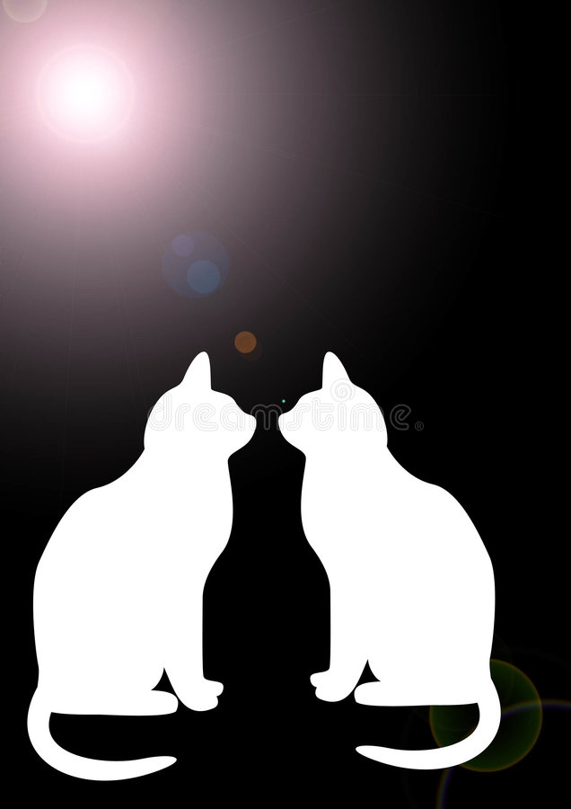 Katzen in der Dunkelheit stock abbildung