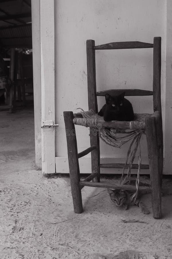 Katzen in der Landseite der Dominikanischen Republik lizenzfreies stockbild