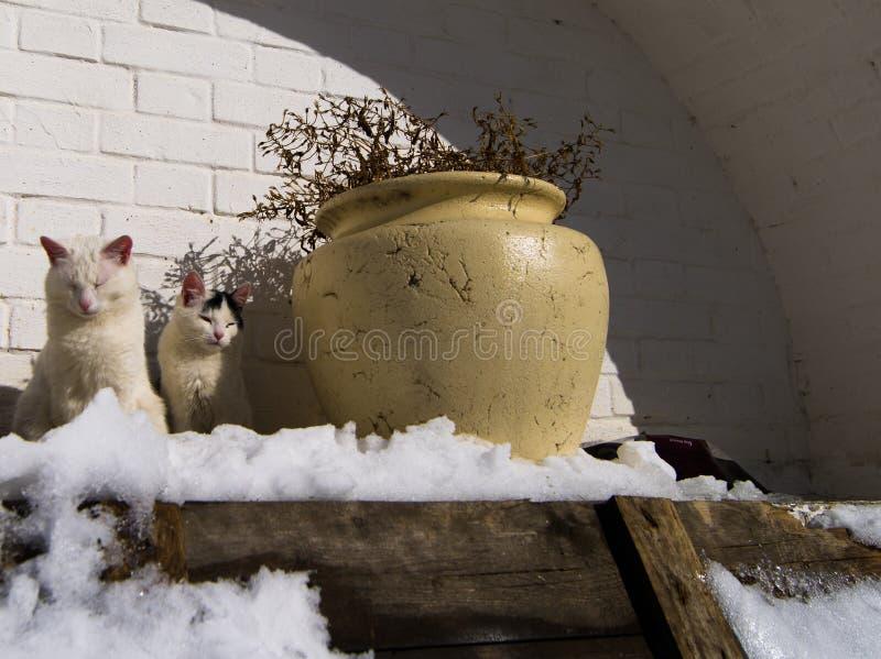 Katzen, die an einem sonnigen Wintertag warm erhalten stockfotos