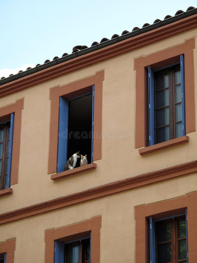 Katzen in einem Fenster lizenzfreies stockfoto