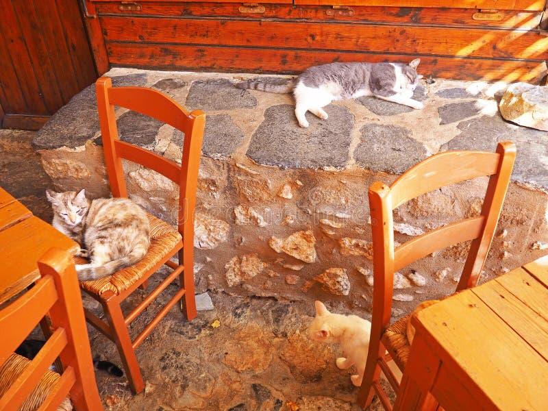 Katzen entspannen sich an einem Restaurant im Freien in Griechenland lizenzfreie stockfotos