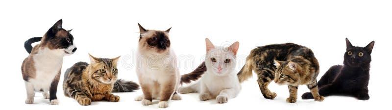 Katzen im Studio lizenzfreie stockfotos