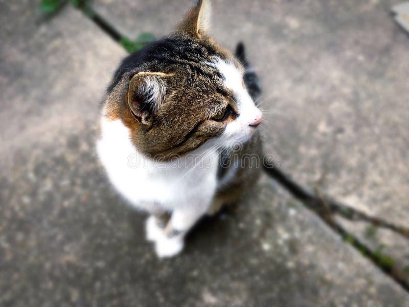 Katzen sind schön lizenzfreies stockfoto