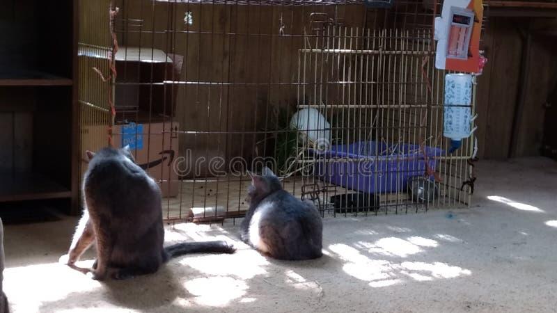 Katzen und Kaninchen stockfotografie