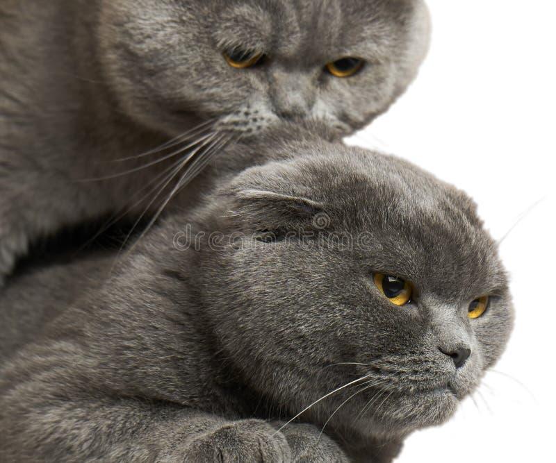 Katzen verbinden lokalisierten auf Weiß stockfotos