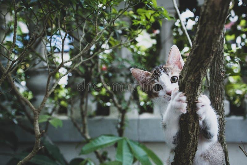 Katzenalltagsleben entspannt sich stockbild