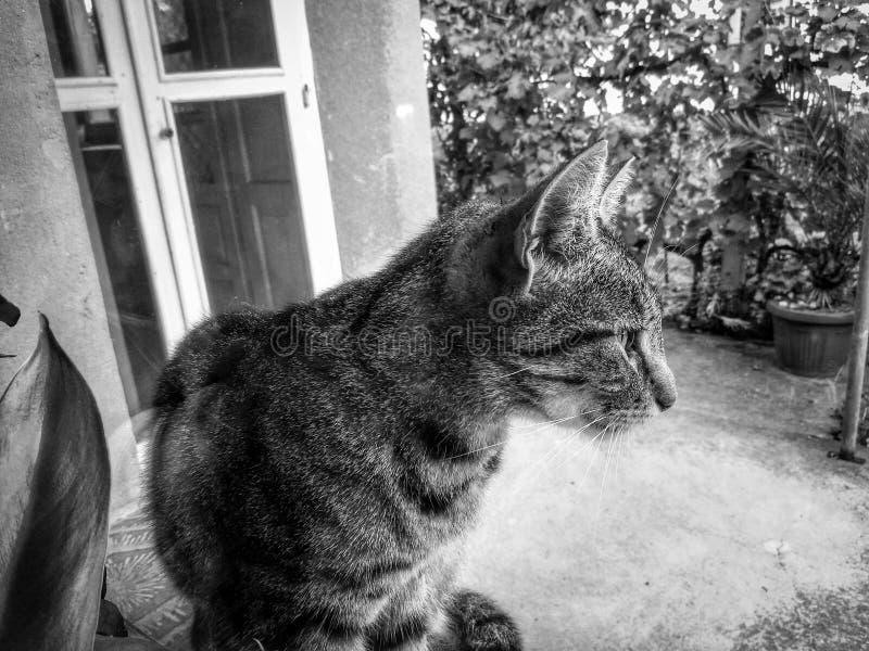 Katzenansicht lizenzfreies stockfoto