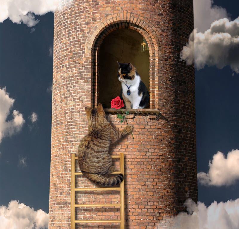 Katzenaufstiege zu seinem Freund 2 lizenzfreies stockbild