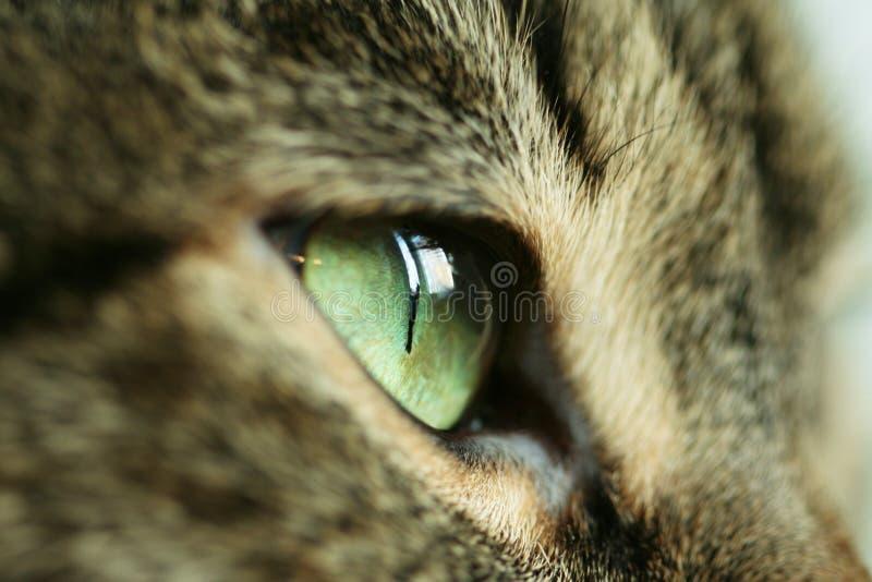 Katzenauge stockfoto
