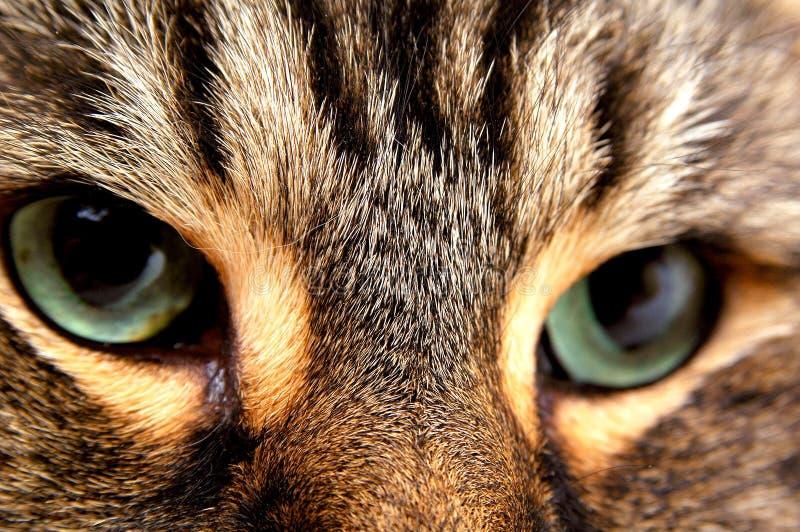 Katzenaugen 2 lizenzfreie stockfotos