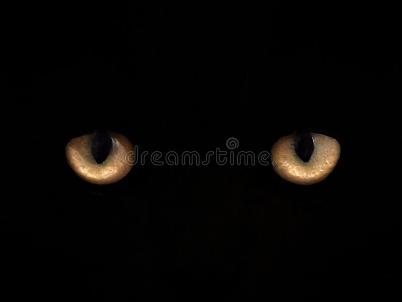 Katzenaugen auf einer schwarzen Hintergrundnahaufnahme Front View stockfotografie