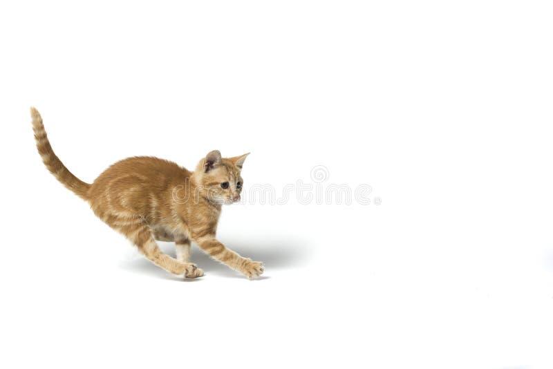 Katzenbetrieb lizenzfreie stockbilder