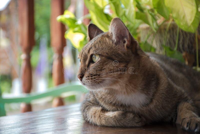 Katzenblick heraus zur Tür stockbilder