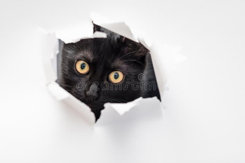 Katzenblick zerriss frechen Peekaboo Weißbuch des Lochs lizenzfreie stockfotografie