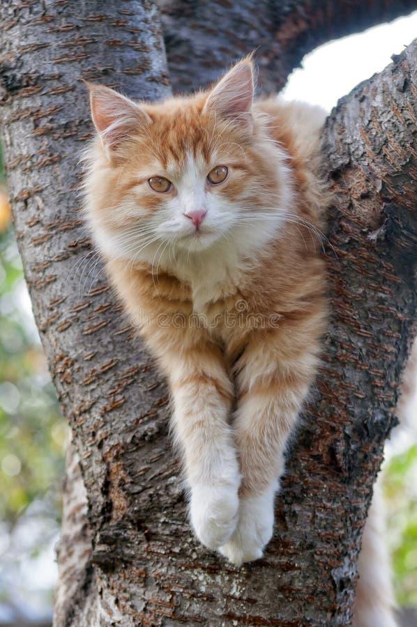 Katzenblicke schicken auf dem Baumabschluß oben sitzen nach lizenzfreie stockbilder