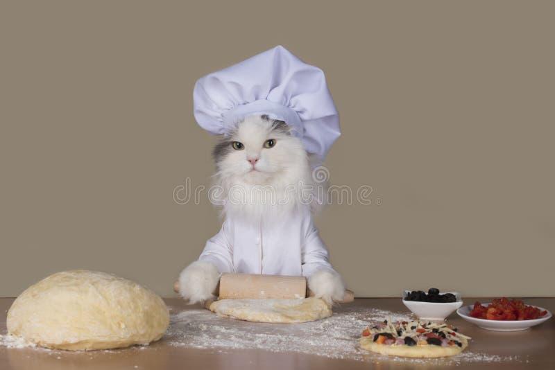 Katzenchef, der eine Pizza zubereitet lizenzfreie stockfotografie