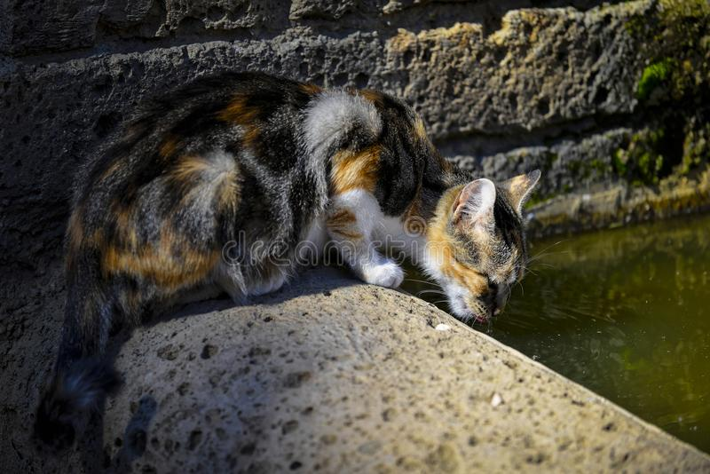 Katzeneinhüllungswasser stockfotos