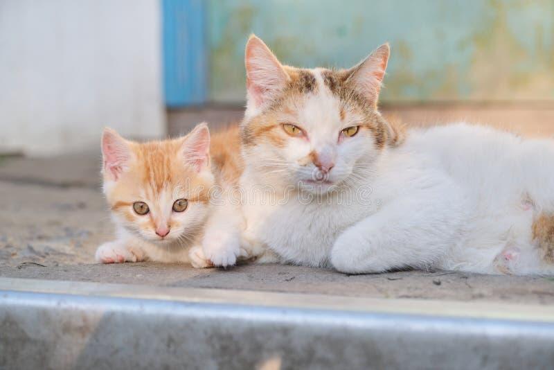 Katzenfamilie, ländliche Mutterkatze mit Kätzchen, Lügen im Freien stockbilder