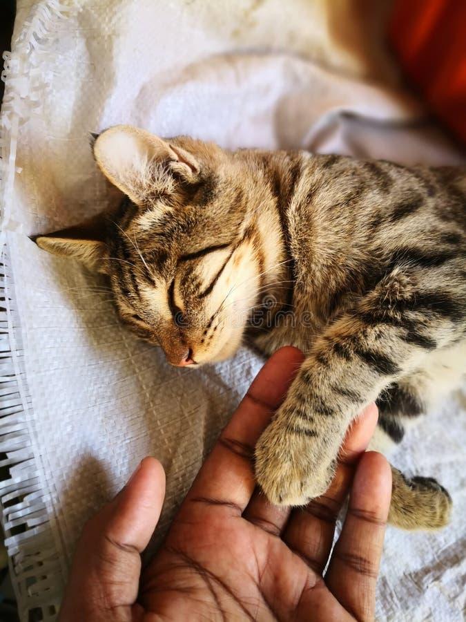 Katzenfamilienleben im Haus stockbild