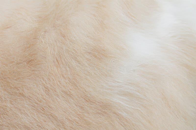 Katzenfellbeschaffenheitshintergrund, flaumiges Braun mit nahtloser Weichzeichnung der weißen Muster lizenzfreie stockbilder