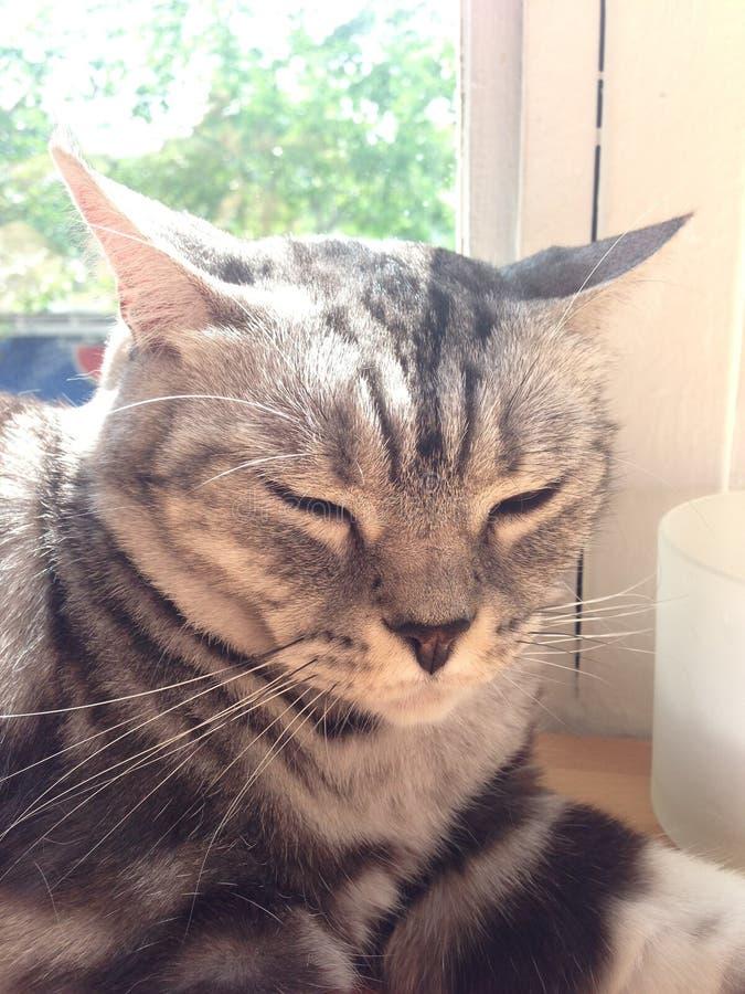 Katzenhaare durch Fenster lizenzfreie stockfotos
