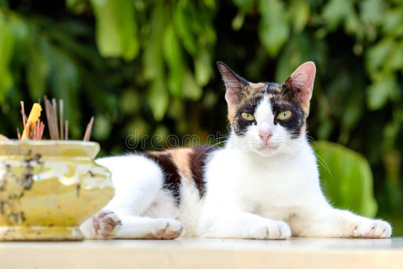 Katzenhocke entspannt auf weißer Marmortabelle lizenzfreies stockbild