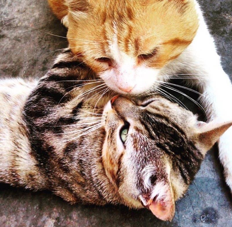 Katzenjagd mit ihrem Freund lizenzfreie stockfotografie