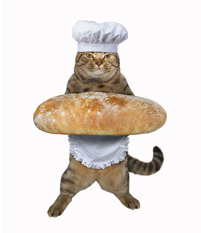 Katzenkoch mit Brot lizenzfreie stockfotografie