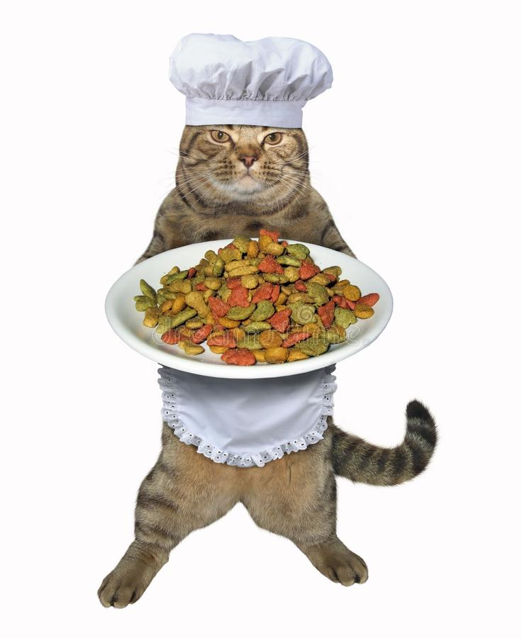 Katzenkoch mit Trockenfutter lizenzfreie stockbilder