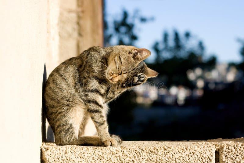 Katzenpflegen lizenzfreie stockfotos