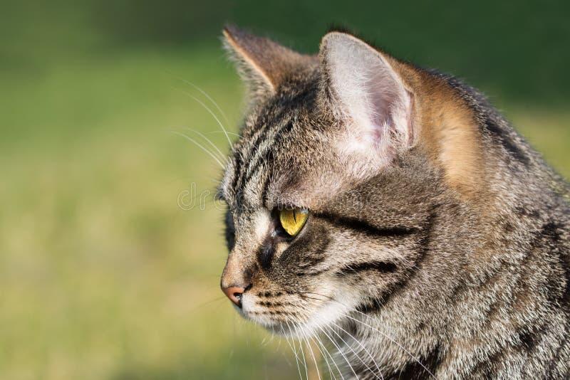 Katzenporträt, Abschluss oben des Kopfes, grüner Hintergrund stockfotografie
