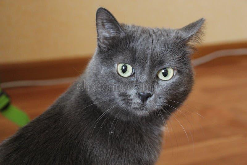 Katzenruhe lizenzfreies stockfoto