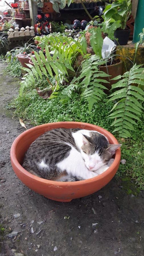 Katzenschlaf in einer Schüssel lizenzfreies stockbild