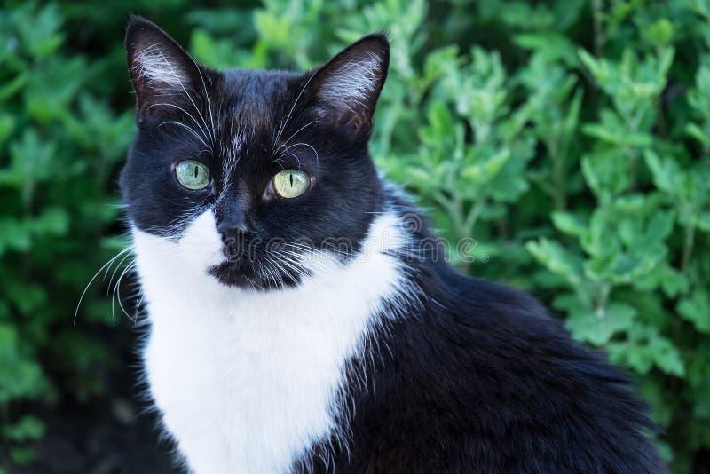 Katzenschwarzweiss-Nahaufnahme, die Sie betrachtet lizenzfreie stockfotografie