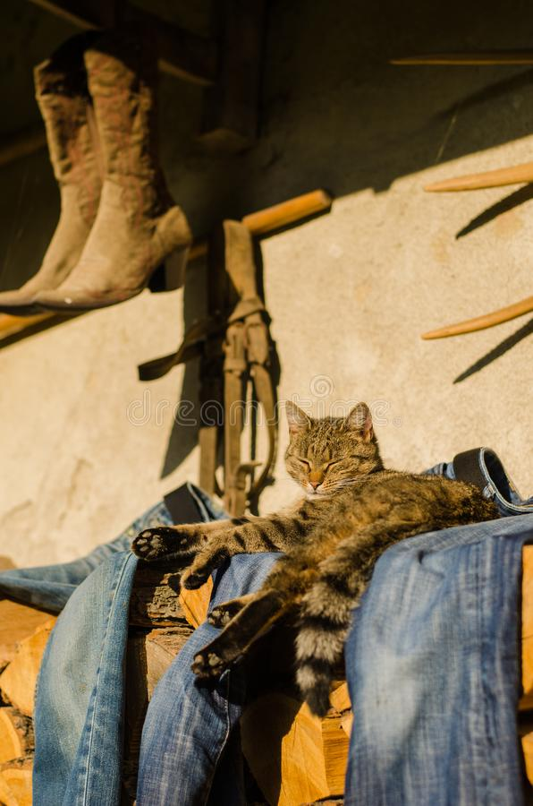 Katzenstillstehen der getigerten Katze Die Katze liegt außerhalb des Hauses stockfotos