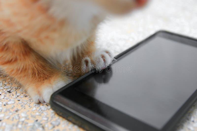 Katze Handy