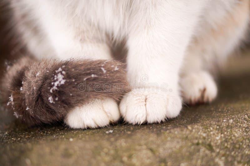 Katzentatzen lizenzfreie stockbilder