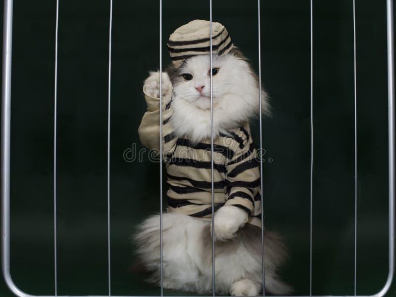 Katzenverbrecher hinter Gittern stockfotos
