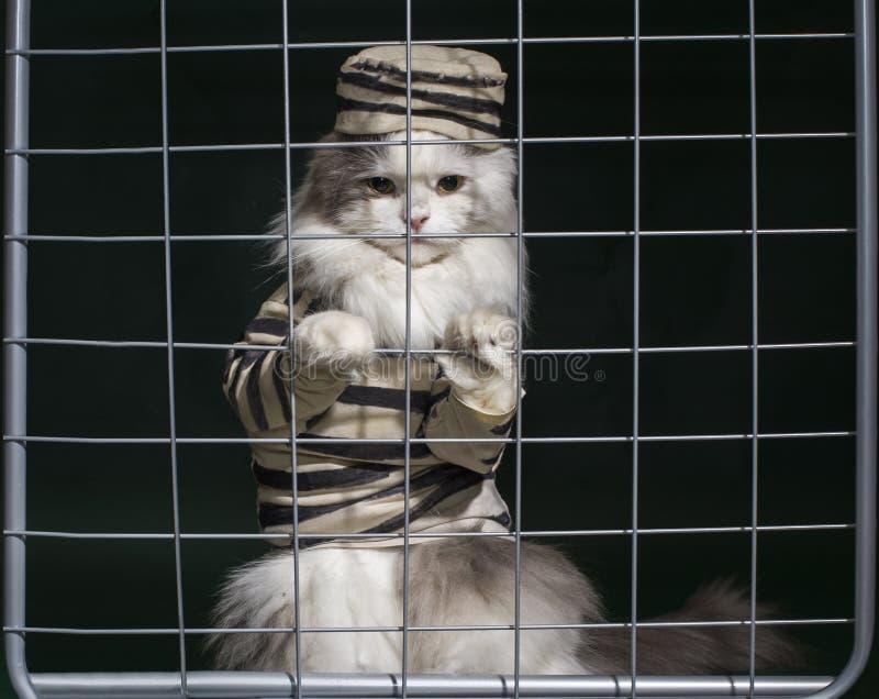 Katzenverbrecher hinter Gittern lizenzfreies stockbild