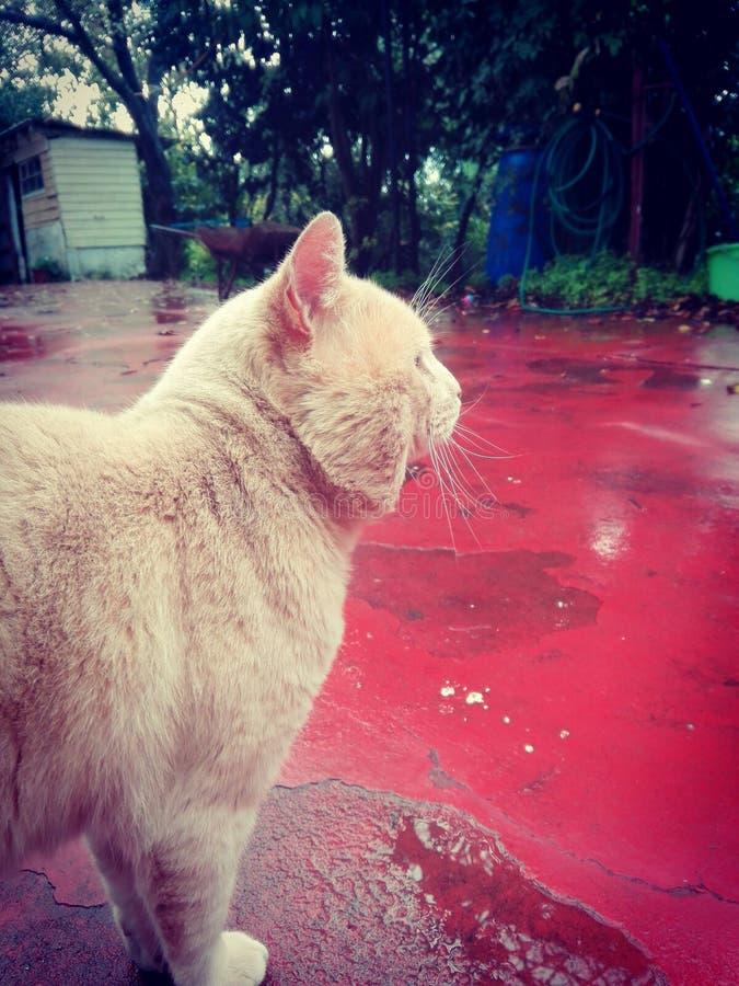 Katzenweinlese lizenzfreie stockfotos